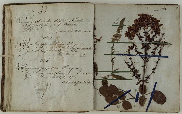 Stranice herbarija: Veronica officinalis