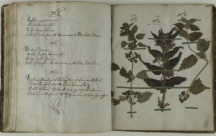 Stranice herbarija: Urtica urens minor